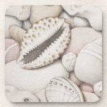 """Cowrie &amp; Abalone Shells &amp; Pebbles Plastic Coasters<br><div class=""""desc"""">Cowrie &amp; abalone shells and pebbles drawn in coloured pencils.</div>"""