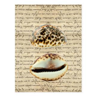 Cowrie shells postcard