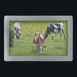 "Cows_0068 Rectangular Belt Buckle<br><div class=""desc"">Cows in the pasture</div>"