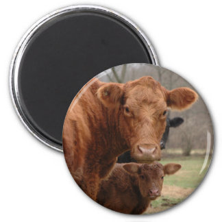 cows 2 inch round magnet