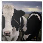 Cows 3 ceramic tile