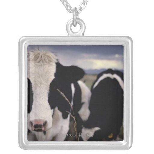 Cows 3 pendant