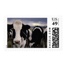 Cows 3 postage