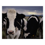 Cows 3 poster