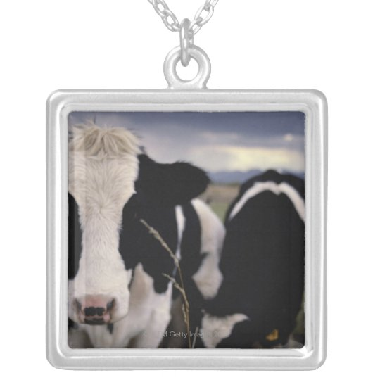 Cows 3 silver plated necklace
