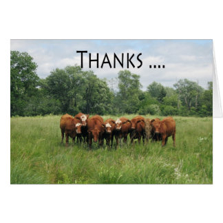 Cows Administrative Pro Day Greeting Card