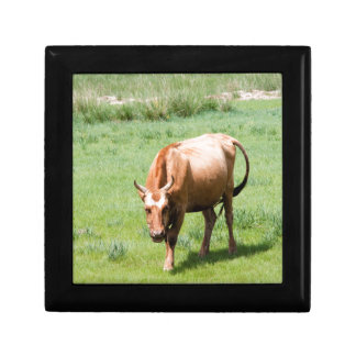cows and bulls jewelry box