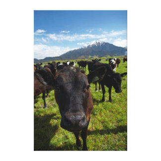 Cows and Mt Somers Canvas Print
