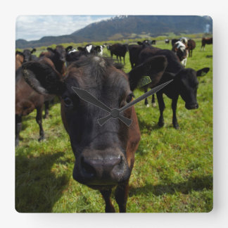 Cows and Mt Somers Square Wall Clock