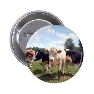 Cows at Dedham Button