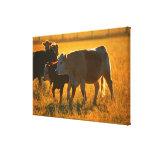 Cows at pasture 2 canvas print