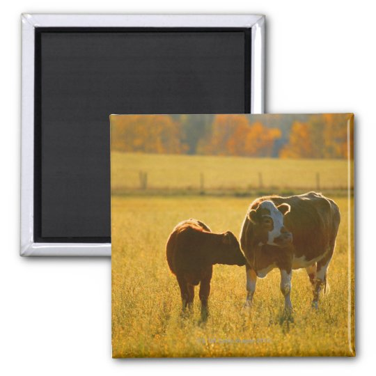 Cows at pasture 2 inch square magnet
