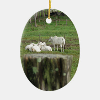 COWS BRAHMAN & FENCE POST RURAL AUSTRALIA CERAMIC ORNAMENT