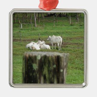 COWS BRAHMAN & FENCE POST RURAL AUSTRALIA METAL ORNAMENT