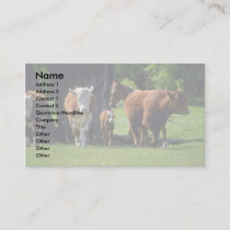 Cows Business Card