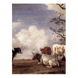 Cows by Potter Postcard