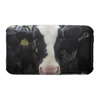 Cows Case-Mate iPhone 3 Cases