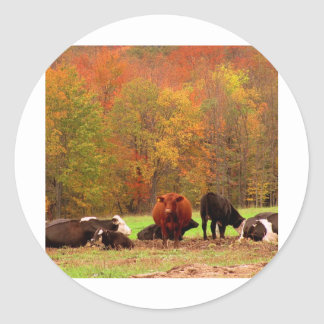 Cows Classic Round Sticker