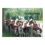 Cows Curious Personalized Announcements