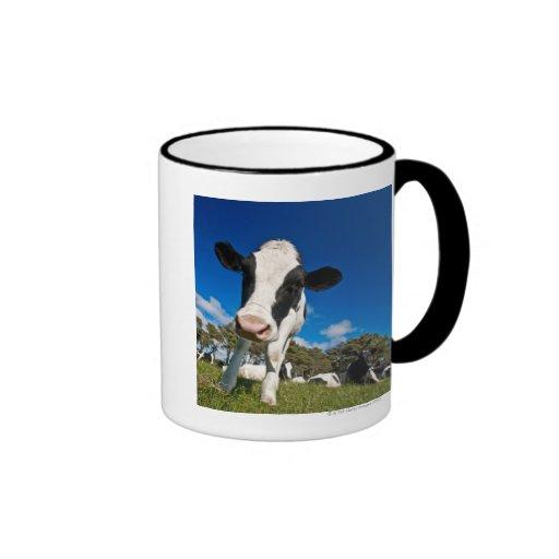 Cows feeding on pasture 2 ringer coffee mug