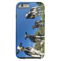 Cows feeding on pasture tough iPhone 6 case