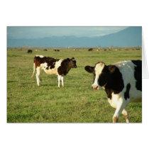 cows got cheese card