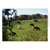 Cows Grazing in Autumn Field