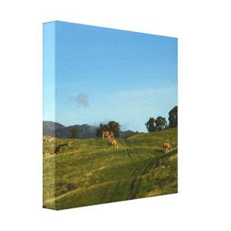Cows Grazing in Cairngorms Gallery Wrap Canvas
