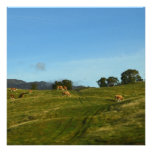 Cows Grazing in Cairngorms Custom Invite