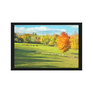 Cows Grazing  In Colorful Fall Farm Field Maine Canvas Print