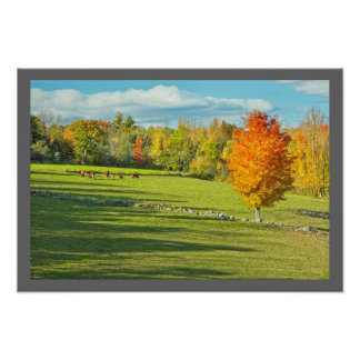Cows Grazing  In Colorful Fall Farm Field Maine Poster