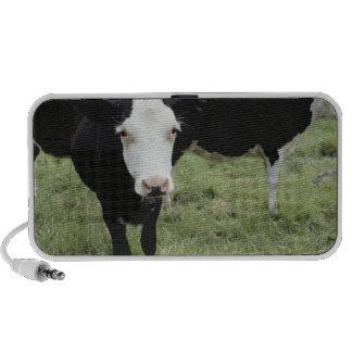 Cows grazing in meadow, Nova Scotia, Canada Portable Speaker