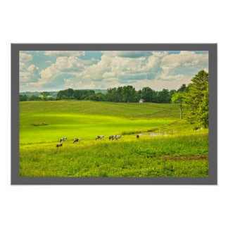 Cows Grazing On Grass In summer Farm Field Poster