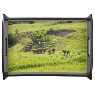Cows Grazing On Hillside In Maine Farm Field Service Trays
