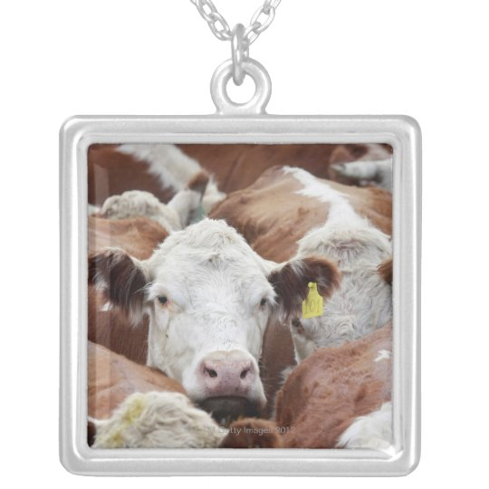 Cows in a corral silver plated necklace