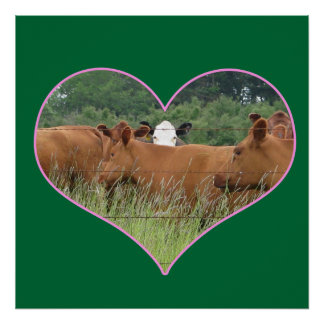 Cows in a Heart Poster
