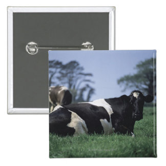 cows in a pasture button