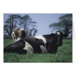 cows in a pasture card