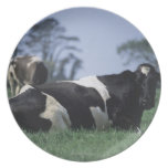 cows in a pasture dinner plate