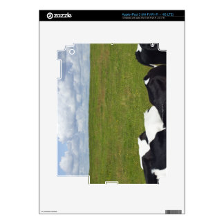 Cows in a pasture iPad 3 decals