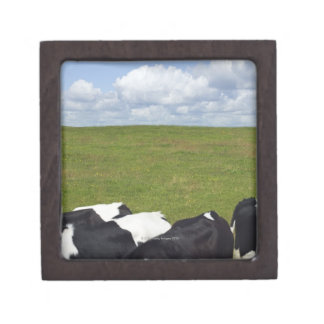 Cows in a pasture. jewelry box