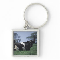 cows in a pasture keychain