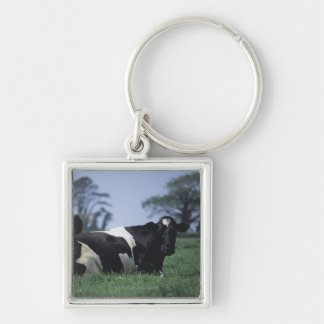 cows in a pasture Silver-Colored square keychain