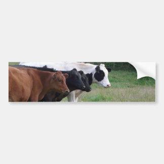 Cows in a Row Bumper Sticker