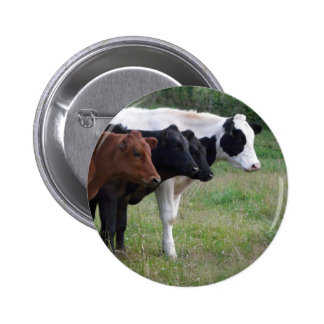 Cows in a Row 2 Inch Round Button