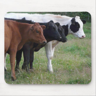 Cows in a Row Mouse Pad