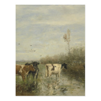 Cows in a Soggy Meadow Postcard