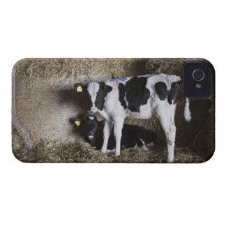 Cows in barn 3 Case-Mate iPhone 4 case