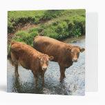 Cows in Devon field, UK 3 Ring Binder