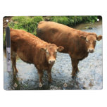 Cows in Devon field, UK Dry Erase Board With Keychain Holder